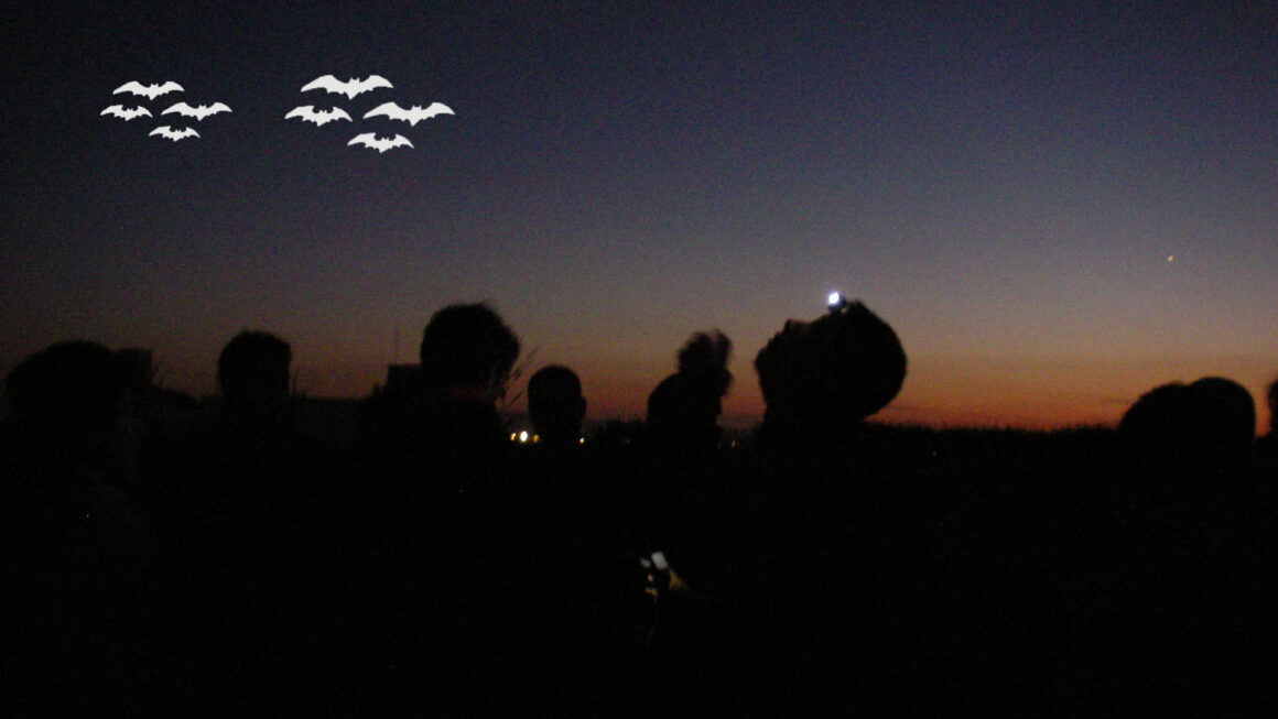 BatNights a Castelló