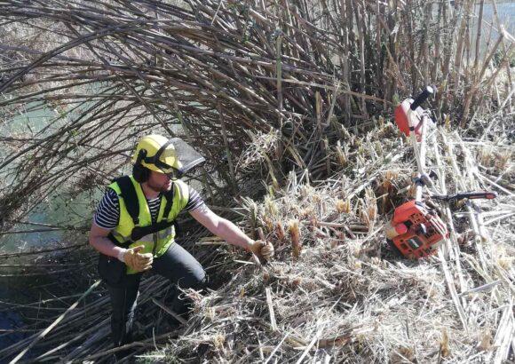 Restauració del riu Túria a Manises
