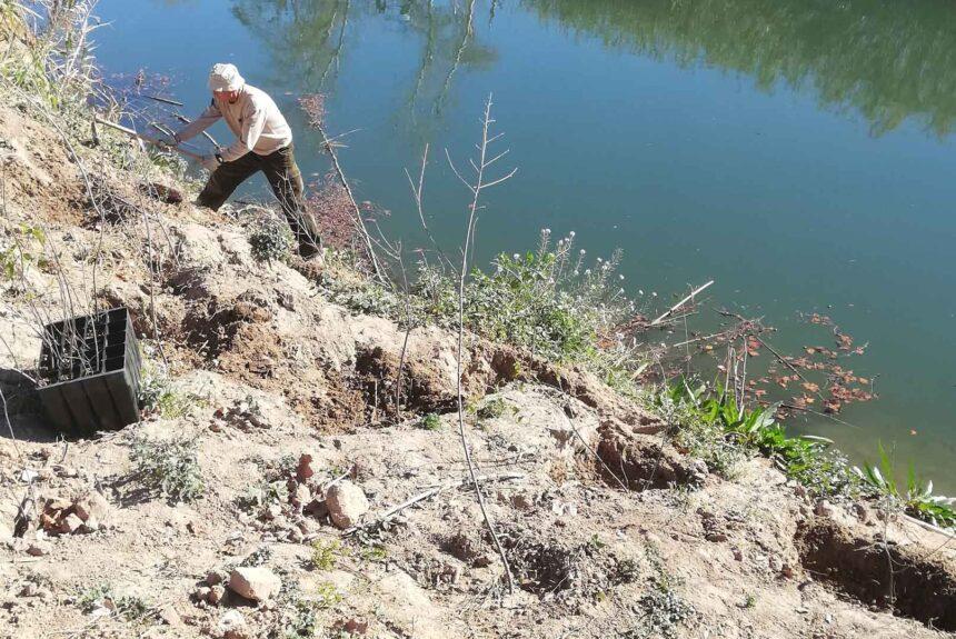 Plantació al riu xúquer