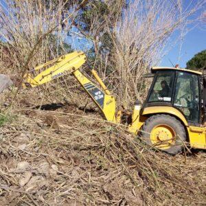 Retirada de caña y plantación en Figueroles