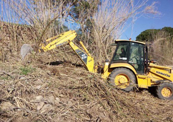 Retirada de canya i plantació a Figueroles