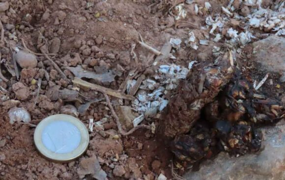 Nutrias en Burriana: detectamos su presencia por 1ª vez en el Clot